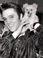 Elvis Puppy Sweetpea